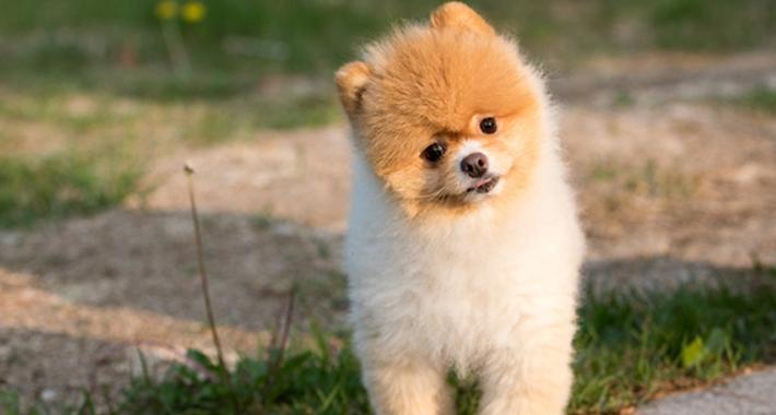 愛犬は今どんな気持ち? 鳴き方・行動からその意味を紹介。
