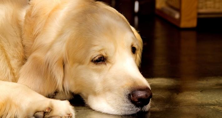 愛犬がご飯を食べない!対処方法を原因別にご紹介