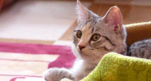 愛猫におすすめなアイテム5選!いざという時役に立ちます♡