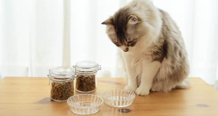 猫の食事・キャットフードの基本。 気をつけるべき事5選