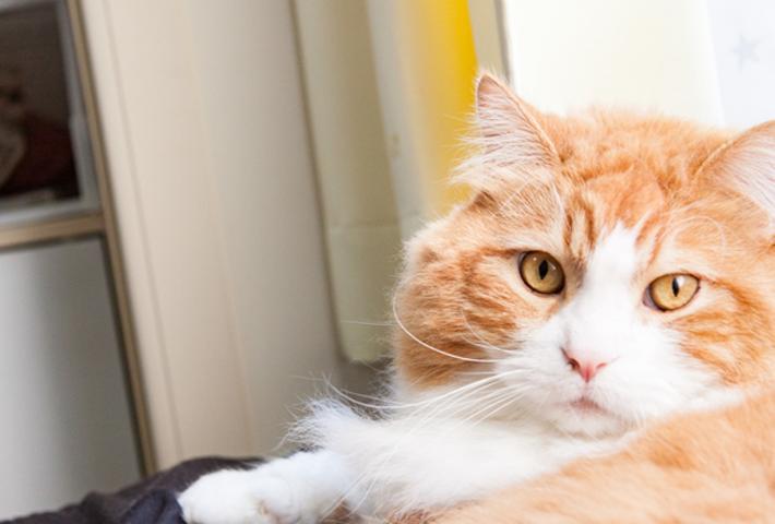 猫の食事の基本を知ろう