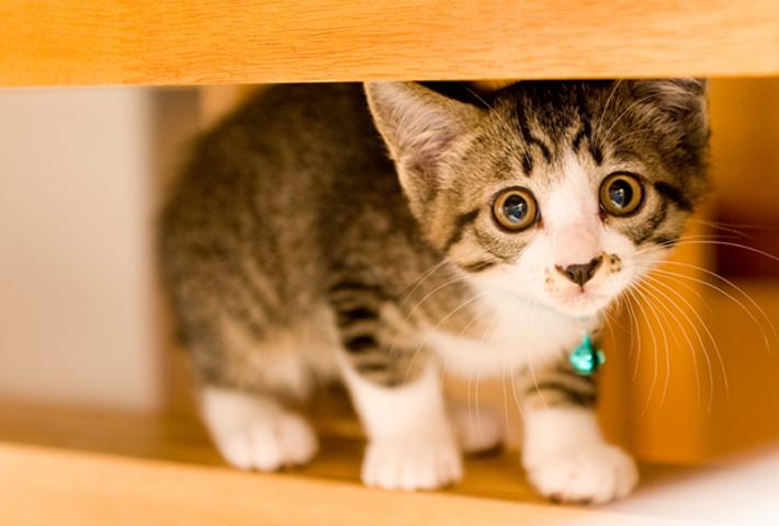 愛猫の食事で気をつける5つのこと