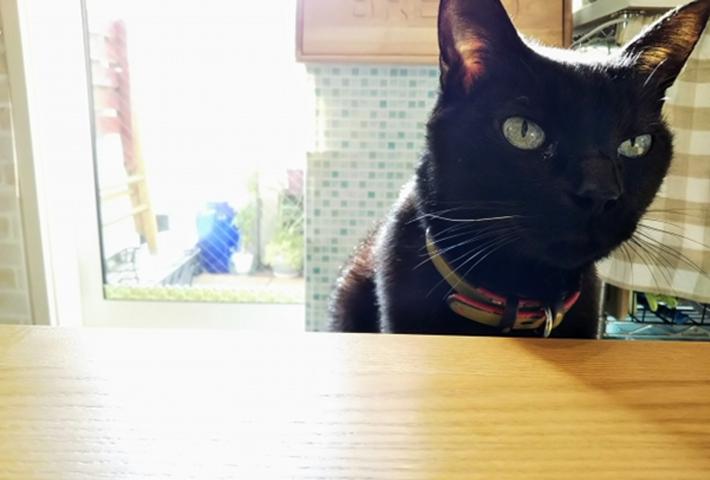 私が愛猫の食事の大切さを痛感したエピソード