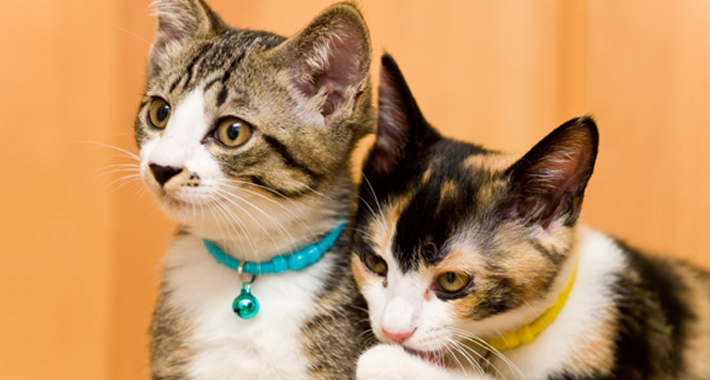 愛猫の鳴き方や行動、気持ちを知りたい! 仲良しになるための4つのキモチサイン