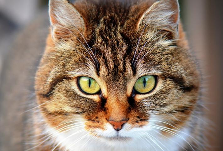 猫の鳴き方の意味