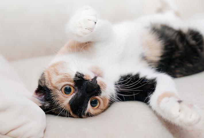 猫用おもちゃを選ぶポイント
