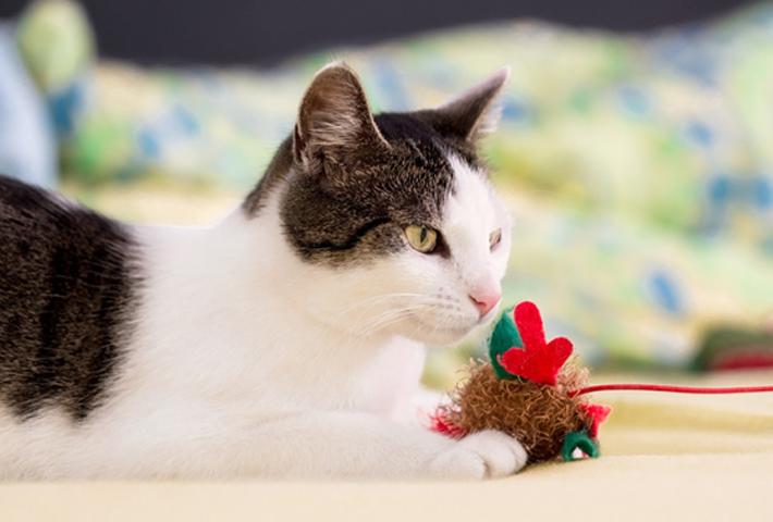猫におすすめのおもちゃ5選
