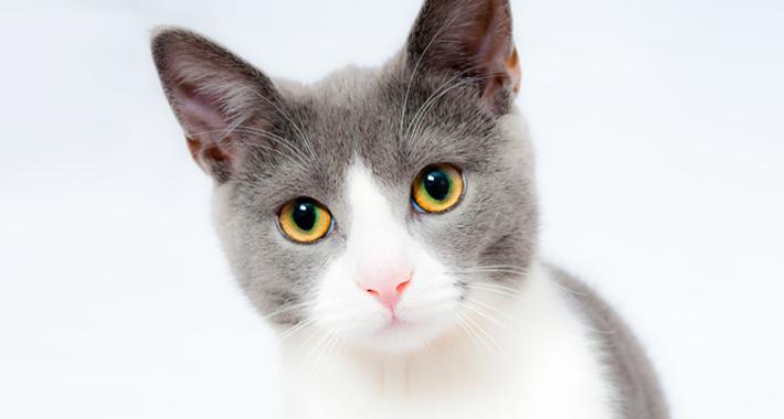 猫がご飯を食べない!原因と3つの改善策