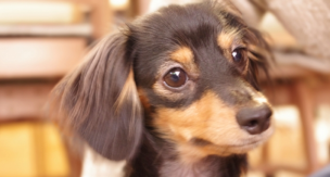 歯磨き、ちゃんと出来てる?失敗しない犬の歯磨き方法