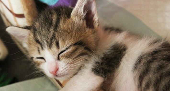 猫と楽しく暮らすための基本しつけガイド