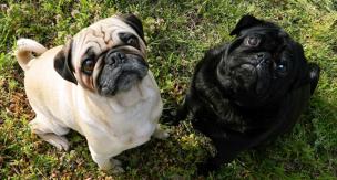 犬の臭いが気になるときの原因と対策をご紹介。