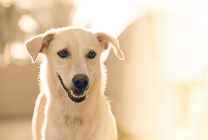 犬の臭いを感じやすい条件とは?