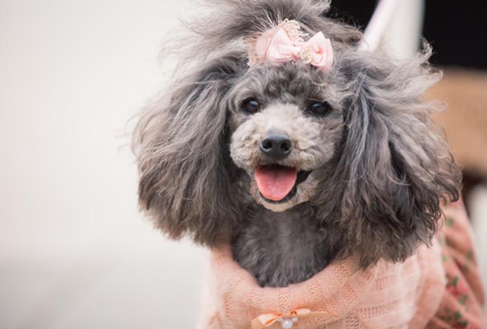 犬の臭いが気になるときの原因と対策をご紹介。まとめ
