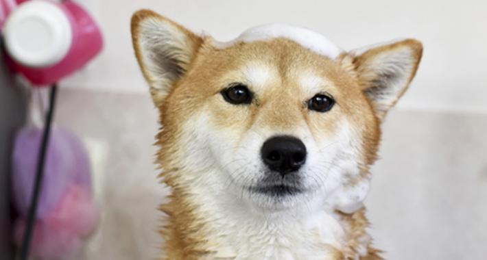 シャンプーどう決めてる? 愛犬に合ったシャンプーの選び方をご紹介。