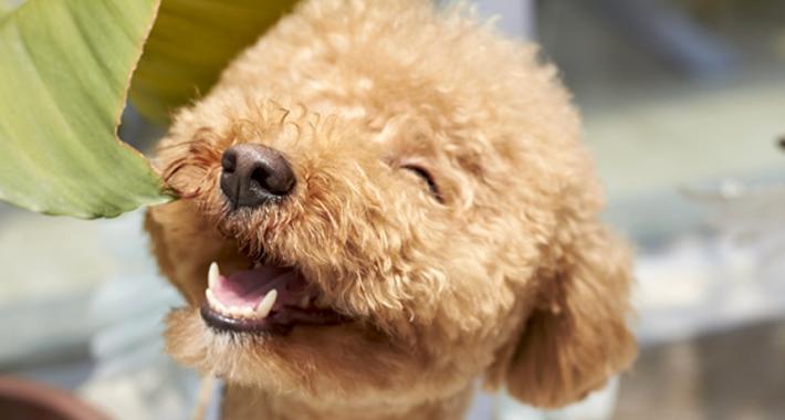 犬をもっと可愛くおしゃれに♡ トリミングのススメ。