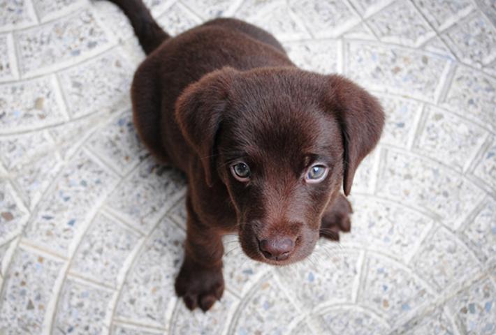 犬をもっと可愛くおしゃれに♡ トリミングのススメ。まとめ