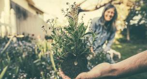 植物の植え替えに絶対使って欲しい!発根促進剤人気ランキング
