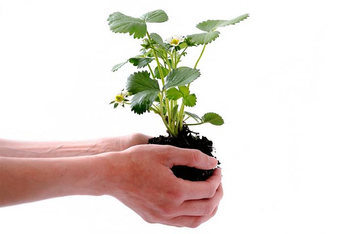 植え替え時に発根促進剤を使う理由とは?