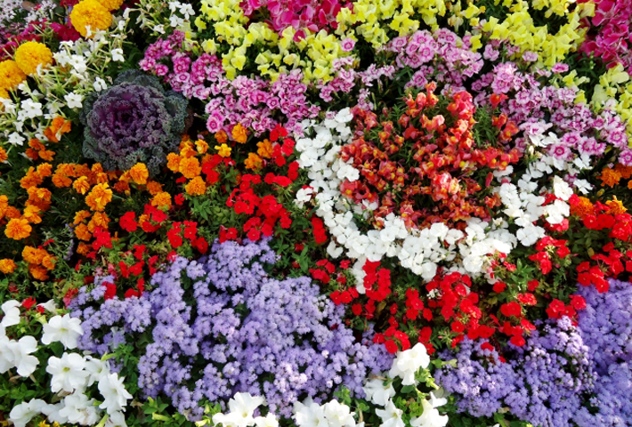 成分や効果を徹底分析。 植物がすくすく育つおすすめ活力剤ランキングのまとめ