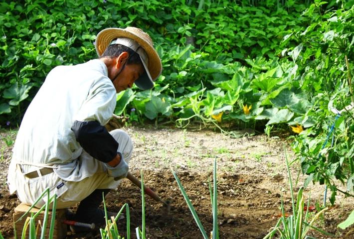 農家が使う肥料と活力剤の違い