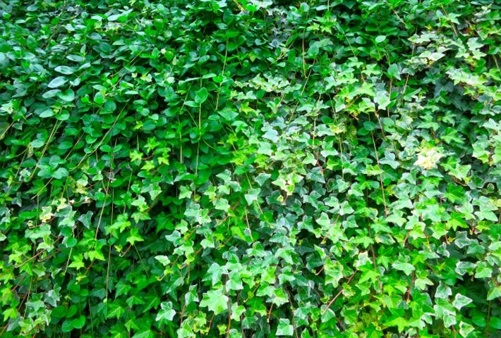 失敗しないグラウンドカバーにする植物の選び方