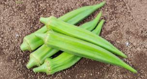 家庭菜園で作る、オクラの育て方をご紹介。