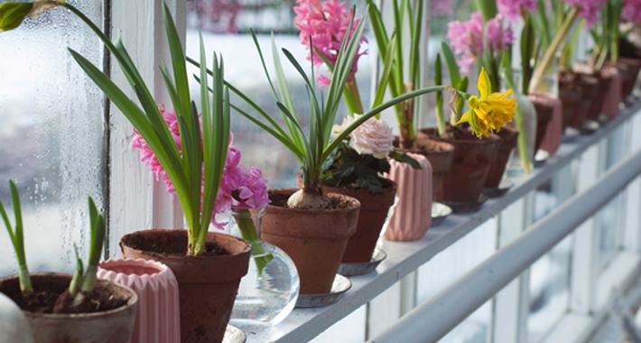 花の鉢植え・庭植えにおすすめの活力剤はコレ!人気ランキング