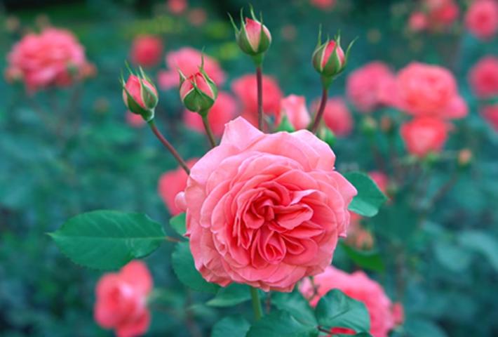 花の鉢植え・庭植えにおすすめの活力剤はコレ!人気ランキング,まとめ