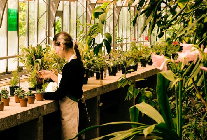 ガーデニングに最適!暑さに強い植物を知ろう
