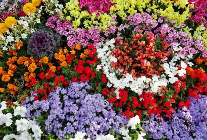 ガーデニングに最適!暑さに強い夏の花をご紹介