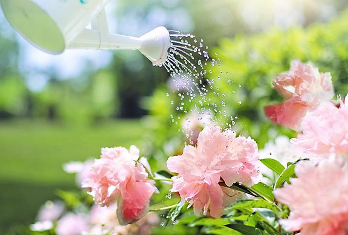 ガーデニング初心者おすすめ・夏の暑さに強い植物のご紹介・まとめ