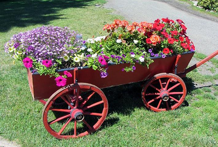 寄せ植えにおすすめの夏の花をご紹介