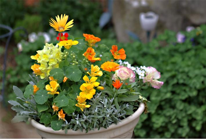 夏の花でガーデニング!寄せ植えにおすすめの花20選・まとめ