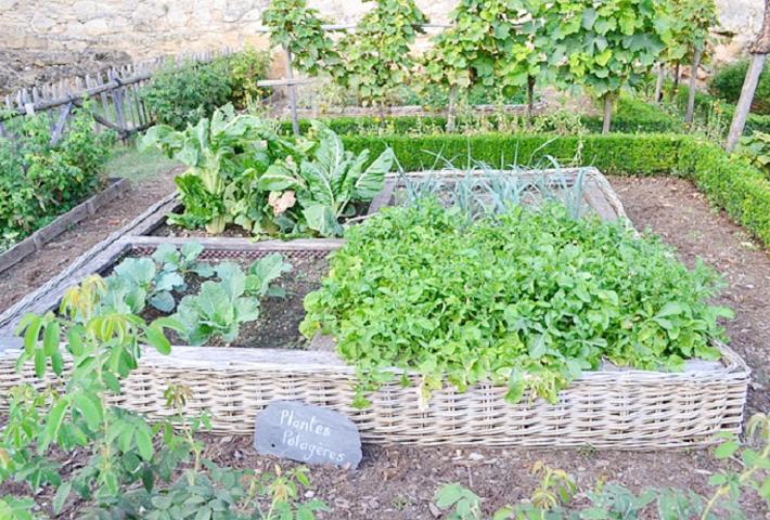 家庭菜園とは