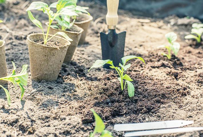 家庭菜園を始める準備