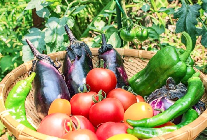 家庭菜園で作る夏の野菜