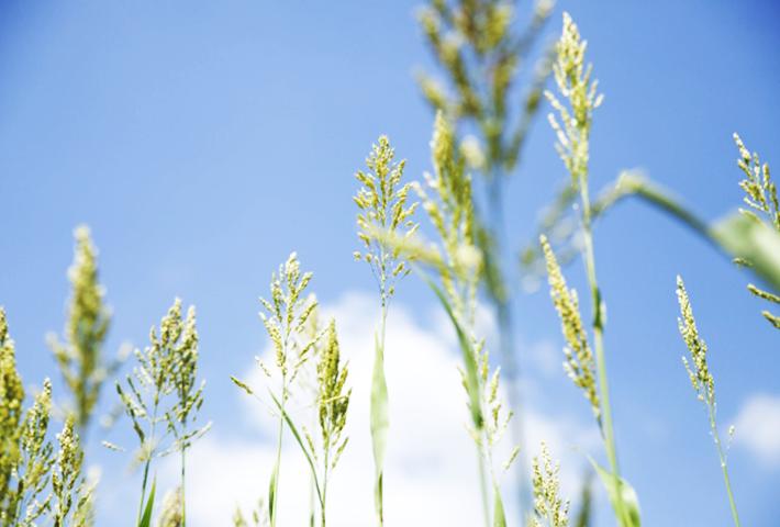 雑草対策②雑草の種類