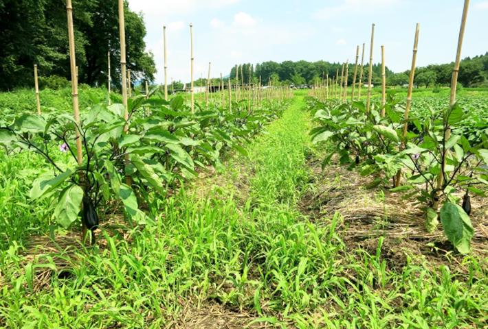 雑草対策③夏の雑草が強い訳