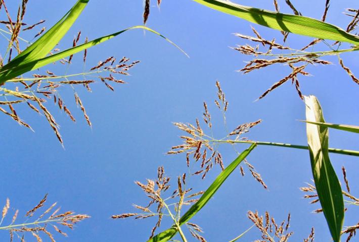 雑草対策④主な夏の雑草