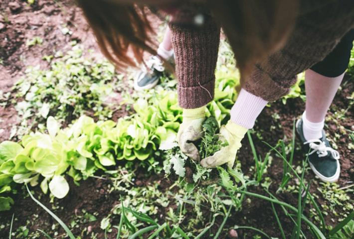 雑草対策⑤主な方法