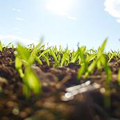 雑草対策3、防草シートの活用