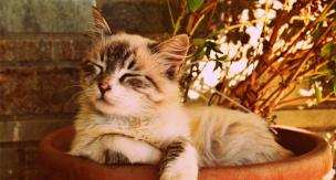 夏バテのサインかも。猫がご飯を食べなくなった時の原因と対処法