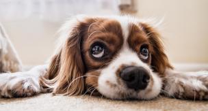 夏バテの原因は?愛犬が食欲不振になった場合の原因と解消法