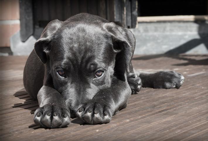 1.犬の食欲不振は夏バテ?犬が夏バテする原因