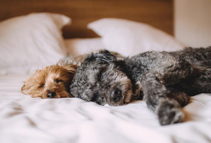 夏バテの原因は?愛犬が食欲不振になった場合の原因と解消法・まとめ