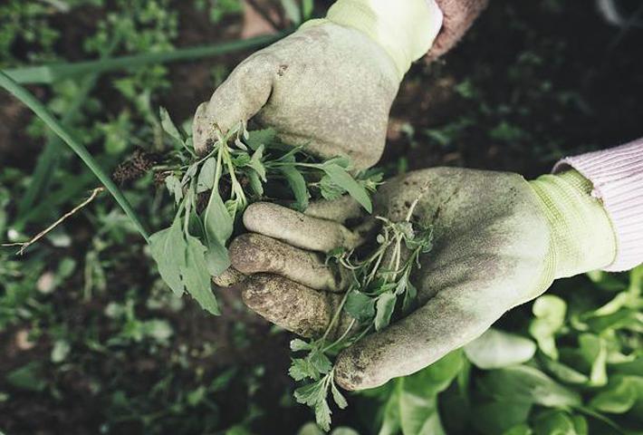 植物を元気にする活力剤って何?