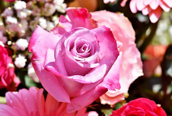 夏には要注意!美しく咲かせるためのバラの剪定方法 まとめ