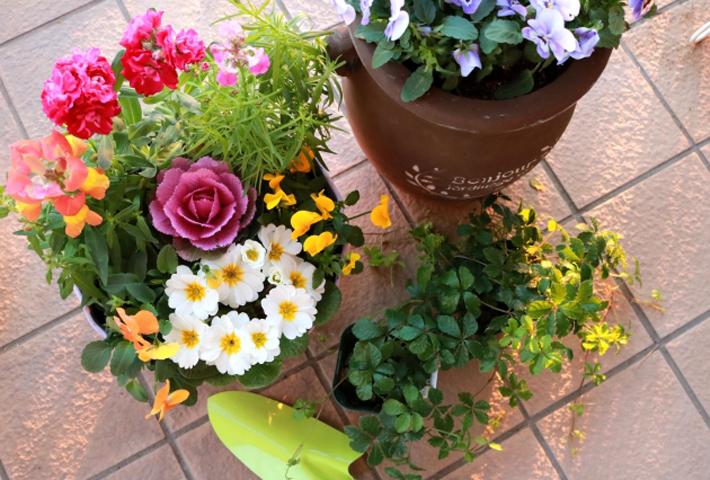 寄せ植えの花苗の選び方