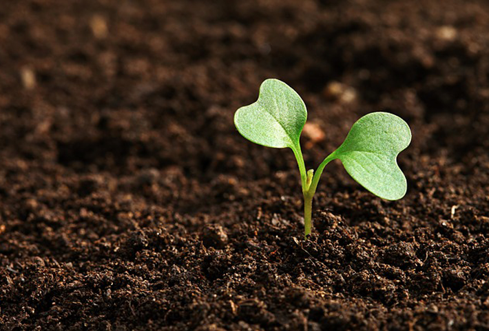 堆肥の種類