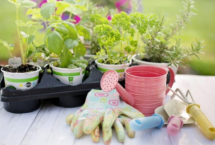 種のまき方、苗の選び方や植えつけ方をご紹介。まとめ